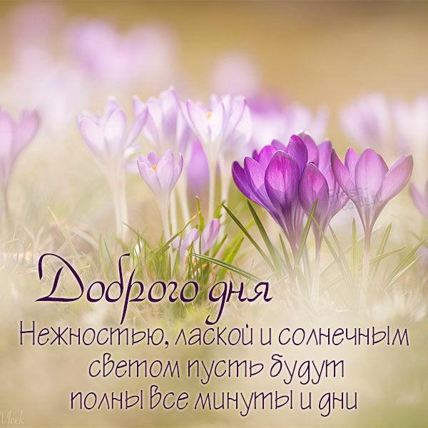 Картинка доброго дня с пожеланием весна