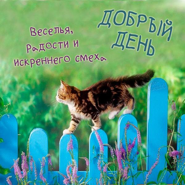 Картинка добрый день котики красивая