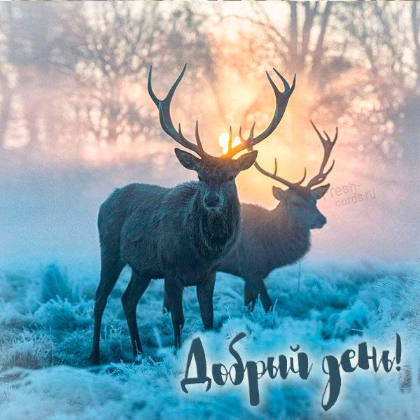 Картинка добрый день зима животные