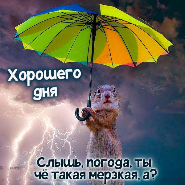 Картинка хорошего дня дождь
