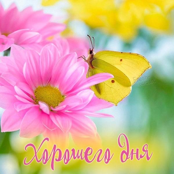Картинка хорошего дня с бабочками