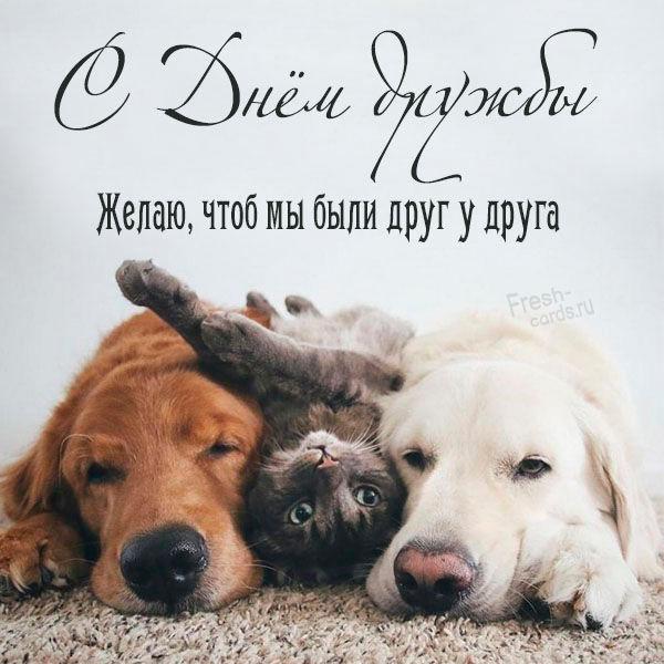 Новая открытка с днем дружбы