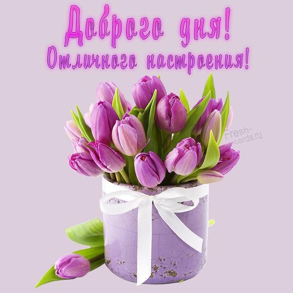 Открытка пожелание доброго дня и отличного настроения